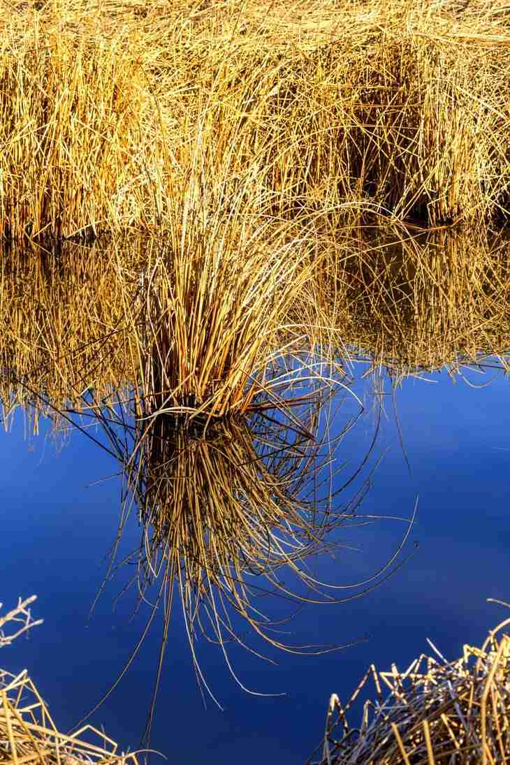 Print of Wild Grass Reflection in Water in Carson Valley Photo