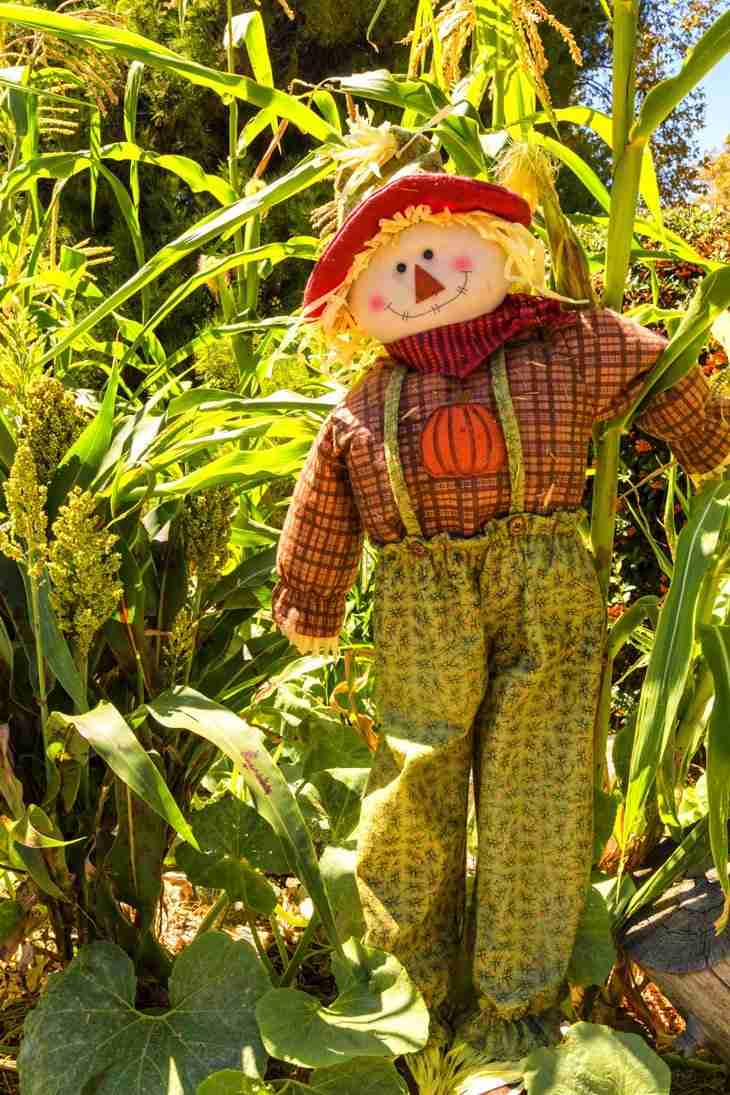 Print of a Scarecrow surrounded by Cornstalks at Oak Glen Photo