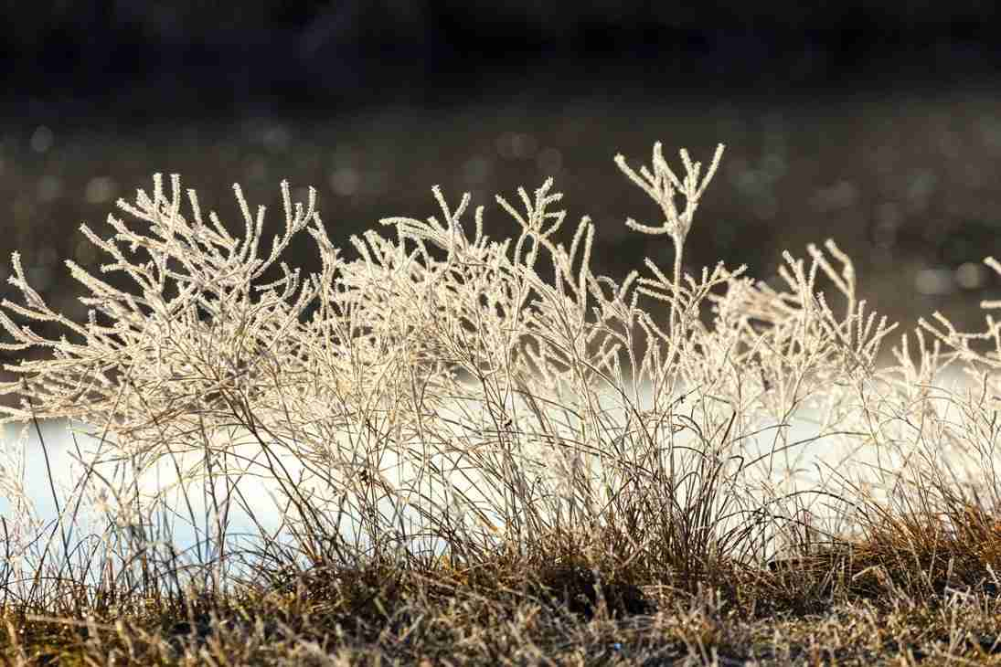 Print of Frost Covered Wild Grass in Carson Valley Nevada Photo