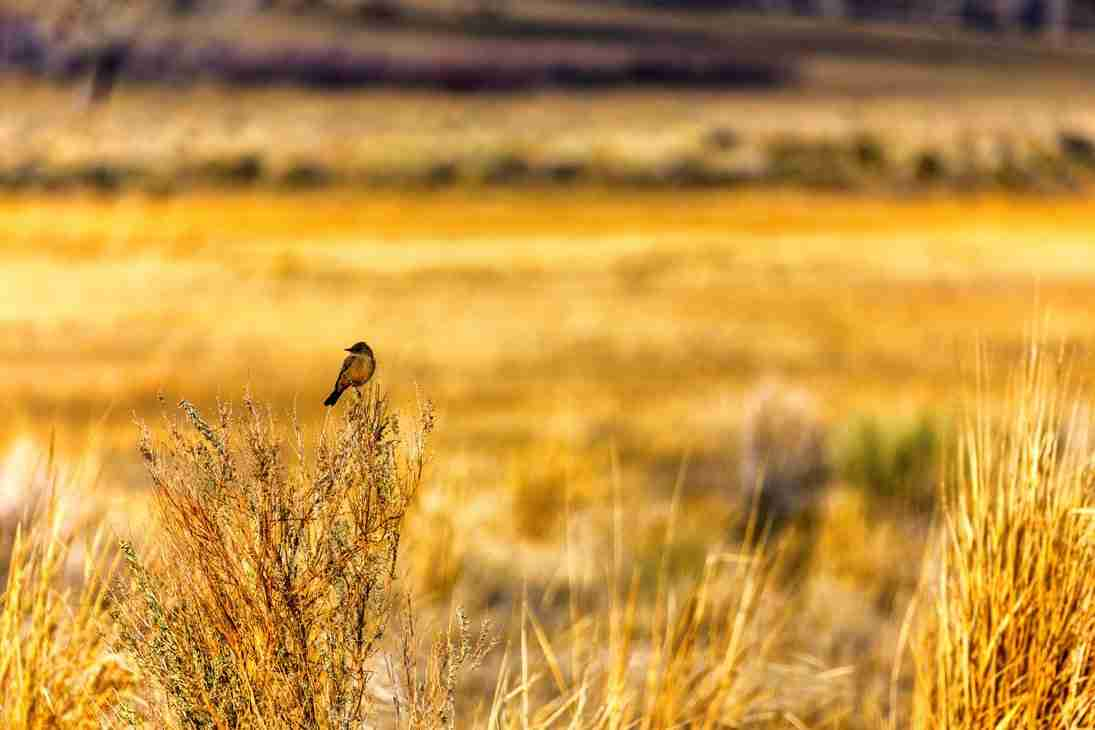 Print of a Bird Resting at Carson Valley's Nature Preserve Photo