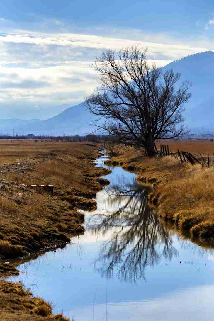 Print of the Reflection of a Tree in Carson River Photo
