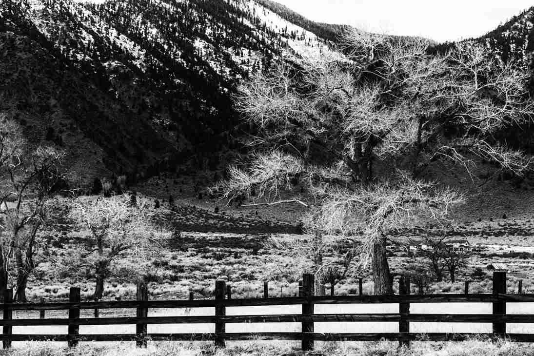 Print of Wintered Tree along Jack's Valley Road near Genoa Photo
