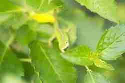 Print of a Small Green Lizard in the Leaves