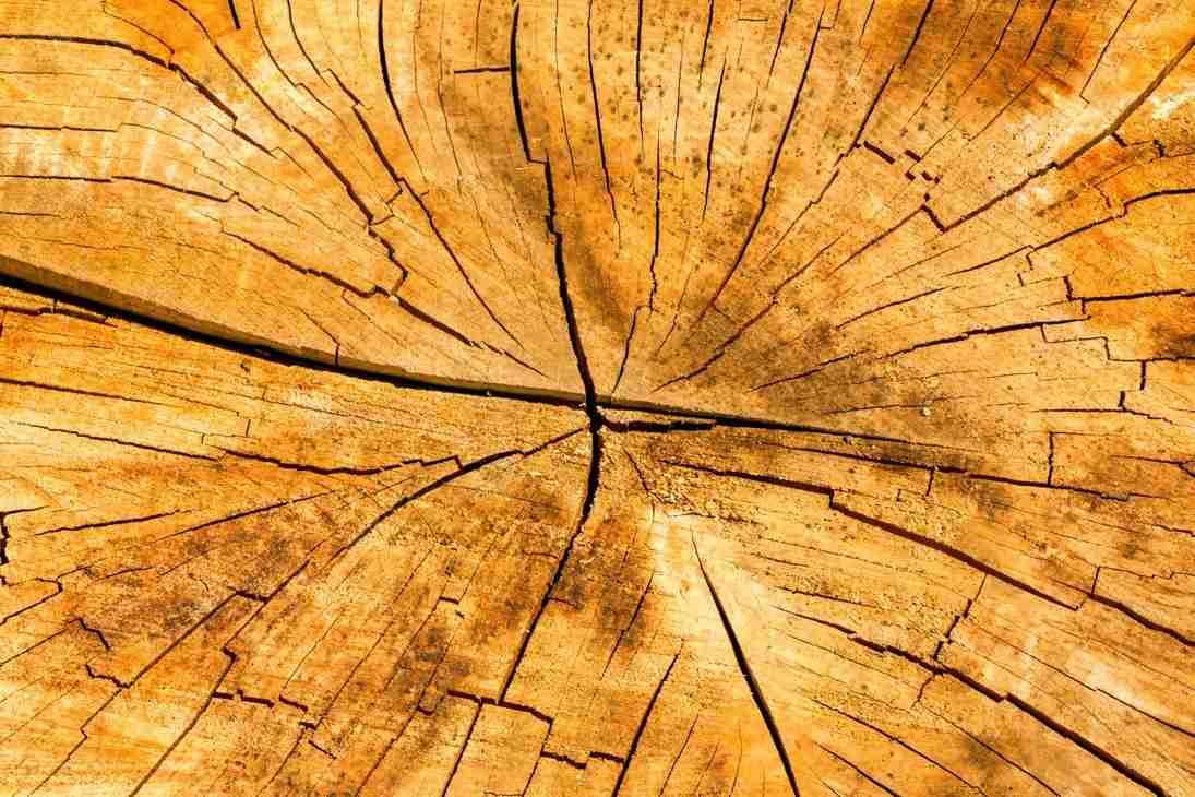 Print of Wooden Tree Stump near Oak Glen Photo