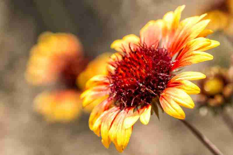 Picture of a yellow flower.
