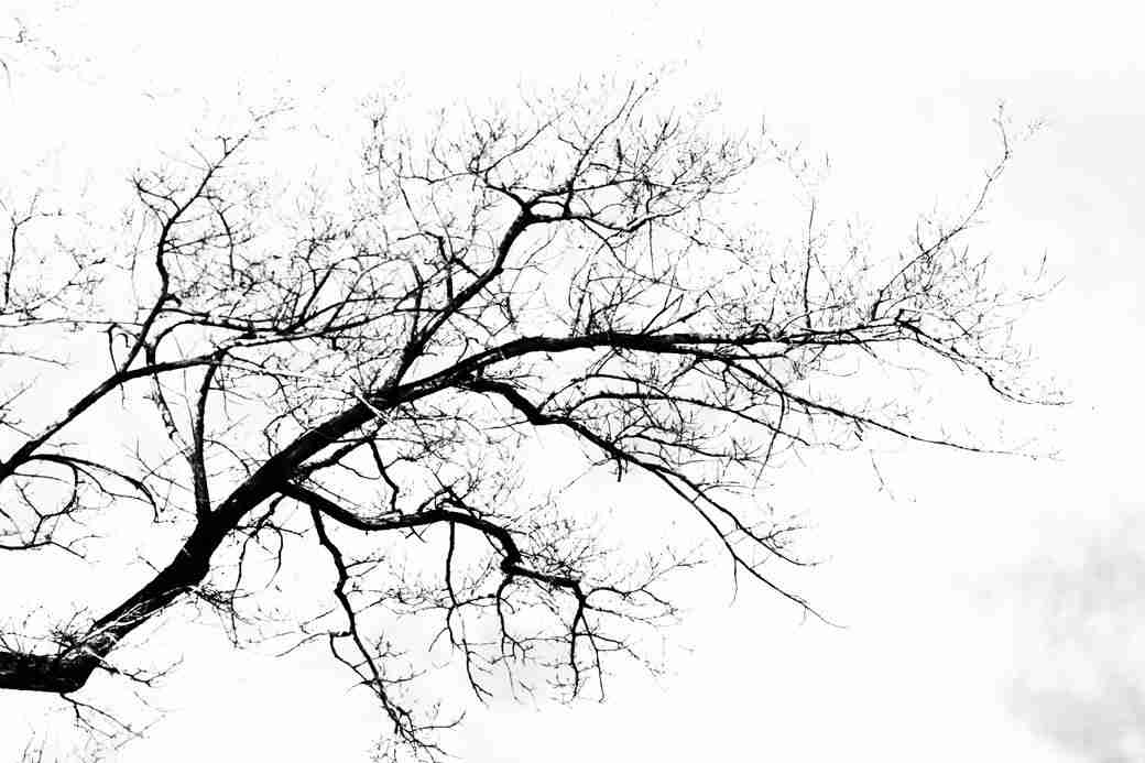 Print of a Wintered Branch Silhouette Photo