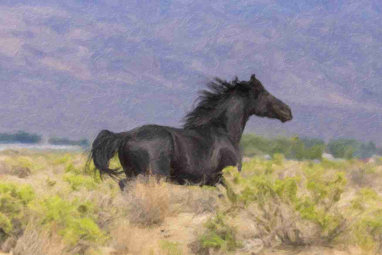 Print of a Black Wild Nevada Mustang Running