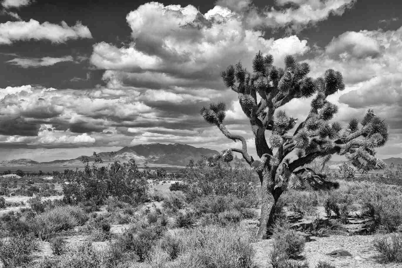 Black & White Print of the California Desert